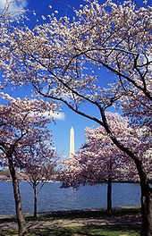 170px-Washington_C_D.C
