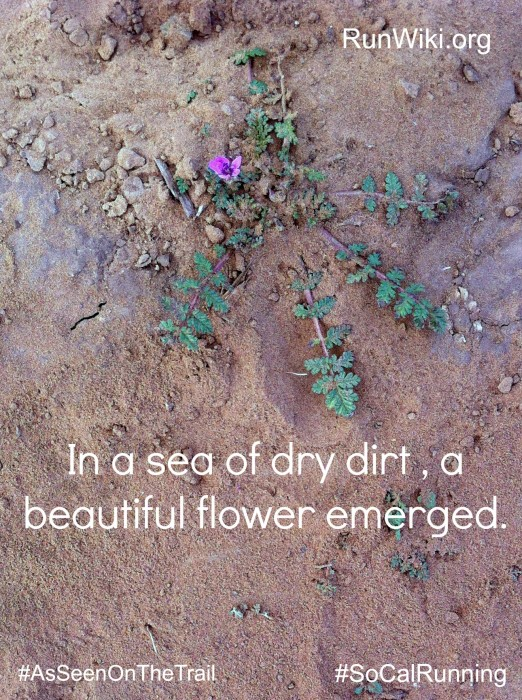 FlowerEmerge