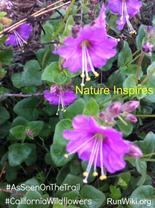 NatureInspires