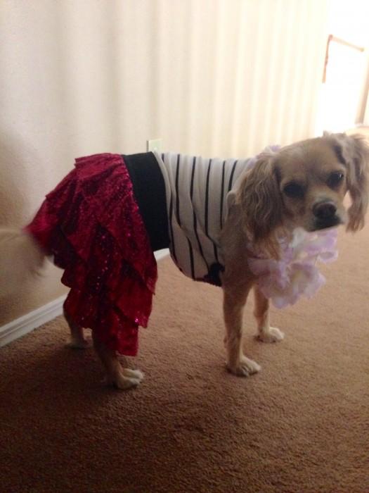 Dog in tutu