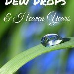 Dew Drops and Heaven Years