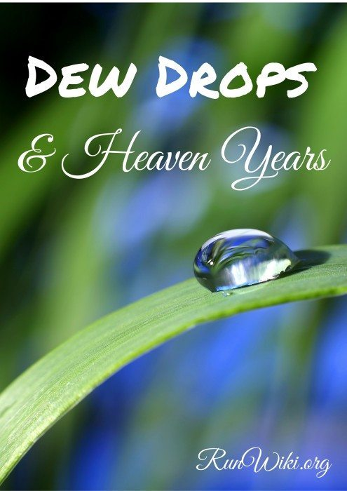Dew Drops and Heaven Years-- notes about my love of nature and how it guides me through my life.